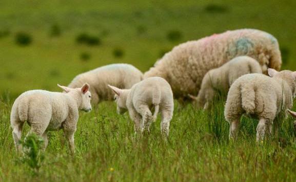 新西兰羊奶粉