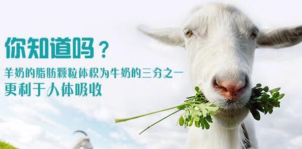 儿童配方绵羊奶