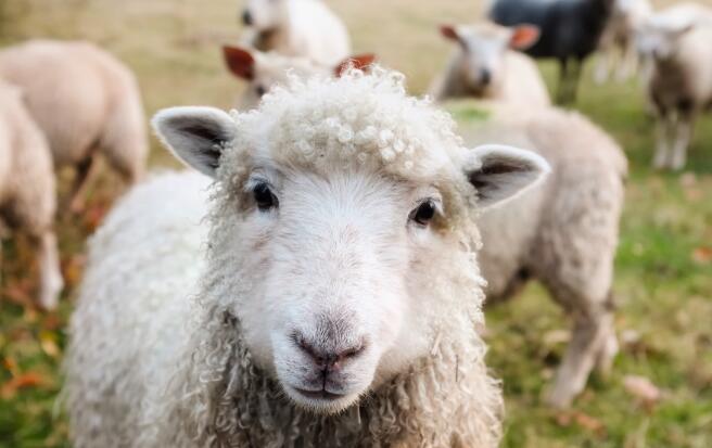羊奶粉挂壁