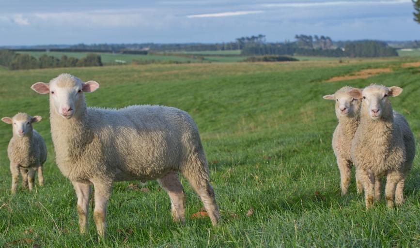 新西兰进口奶粉牌子排行前十名有哪些?